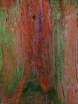 Weathered Wood In Fall by Sandi OReilly
