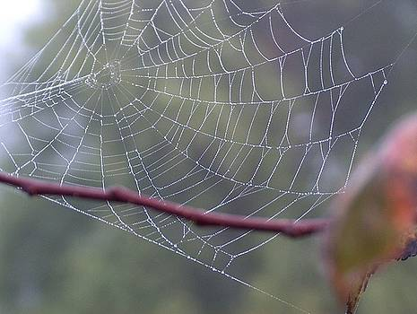 Web in Fog by Denise   Hoff