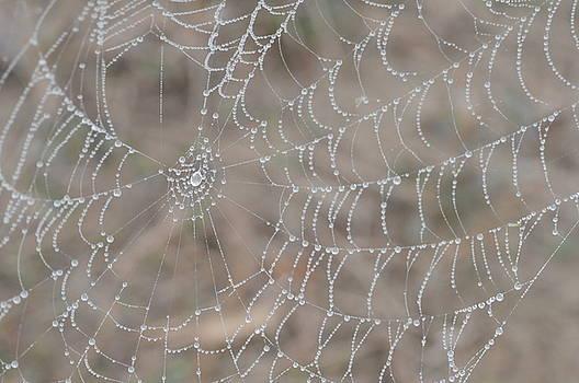 Web of Dew by Jennifer Englehardt