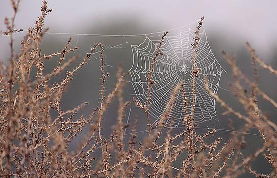 Robin Street-Morris - Web of Diamonds