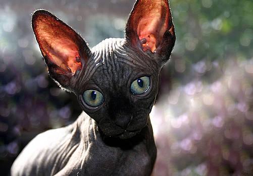 Wee Little Kitten by Ruben  Flanagan