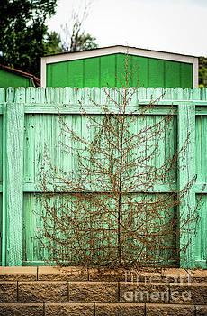 Jon Burch Photography - Weed