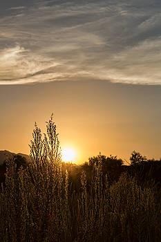 Weedfields by Ryan Seek