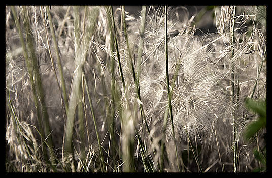 Weeds #1 - 310061 by TNT Images