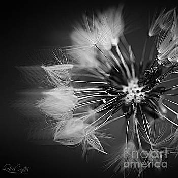 Weeds Or Wishes... by Rene Crystal