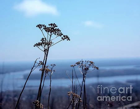 Weeds by Tina Hailey