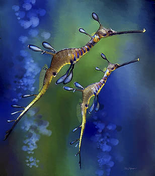 Weedy Sea Dragon by Thanh Thuy Nguyen