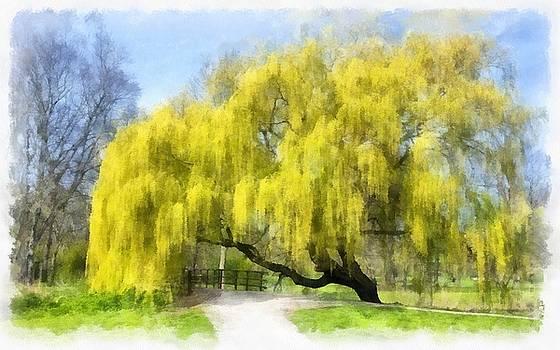 Weeping Willow Aquarell by Maciek Froncisz