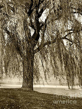 Weeping Willow Mist by Carol F Austin
