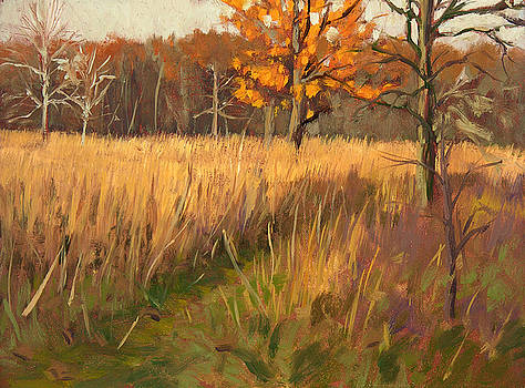 Wehr Nature Center No. 2 by Anthony Sell