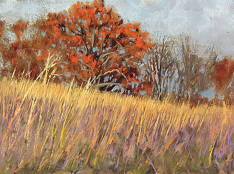 Wehr Nature Center No. 3 by Anthony Sell
