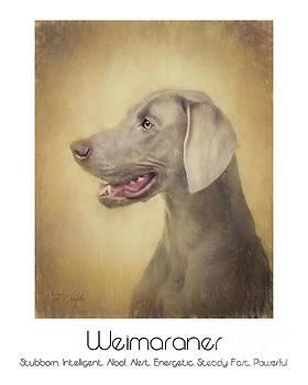 Weimaraner Poster by Tim Wemple