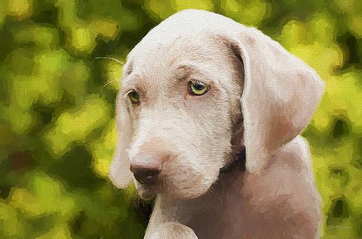 Weimaraner Puppy - Painting by Ericamaxine Price