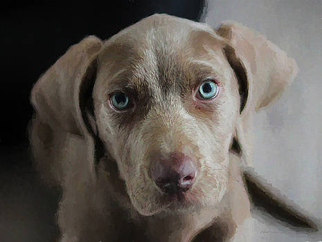Weimaraner Puppy with Blue Eyes - Painting by Ericamaxine Price