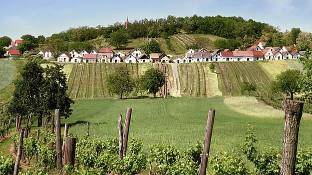 Weinviertel Landschaft Galgenberg Kellergasse by Menega Sabidussi