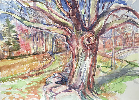 Weir Farm Oak Tree by Abbie Rabinowitz