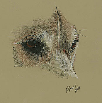 Welsh Corgi eyes by Norma Rowley