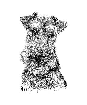 Welsh Terrier @airedalewelsh by ZileArt