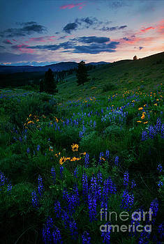 Wenas Meadow Trail by Mike Dawson