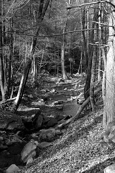 Wesser Creek Trail by Kathy Schumann
