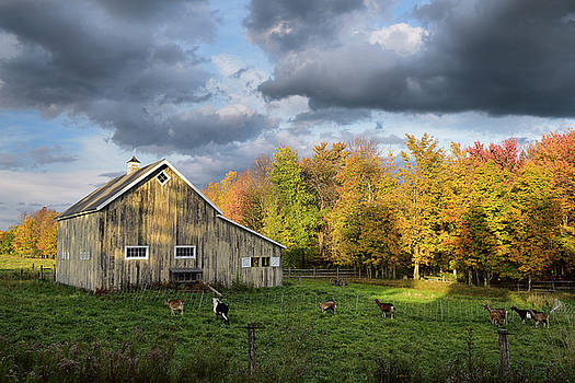 Reimar Gaertner - West Hill goat farm in the Fall near Stowe Vermont