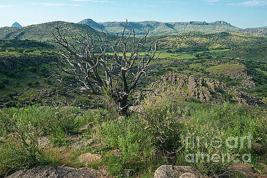 Billy Moore - Chihuahuan desert view.