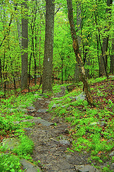 West Virginia AT by Raymond Salani III