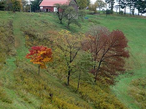 West Virginia Hillside by Terry  Wiley