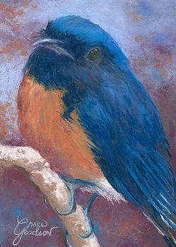 Western Bluebird by Grace Goodson