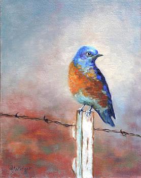 Western Bluebird by Katy Widger
