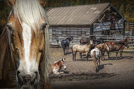 Randall Nyhof - Western Horses in an Outfitters Corral