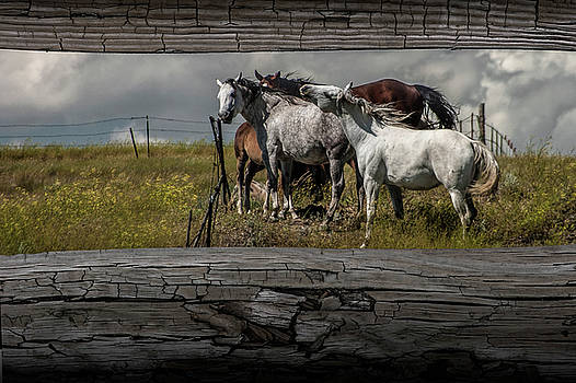 Randall Nyhof - Western Horses through the Fence
