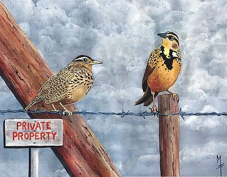 Western Meadowlark by Marsha Friedman