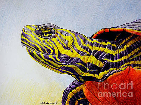 Christopher Shellhammer - Western Painted Turtle