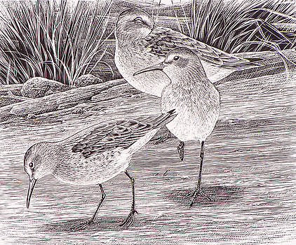Western Sandpipers by Shari Erickson