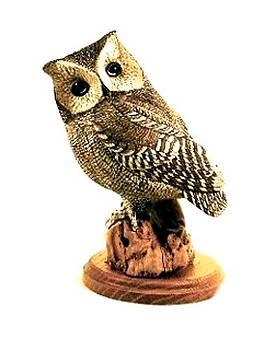 Western Screech Owl by Peter Vaice