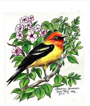 Western Tanager by Bob Patterson