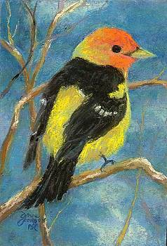 Western Tanager by Grace Goodson