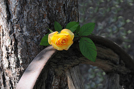 Western Yellow Rose II by Jody Lovejoy