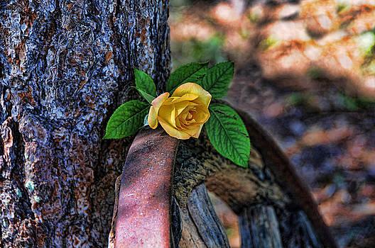 Western Yellow Rose VIII by Jody Lovejoy