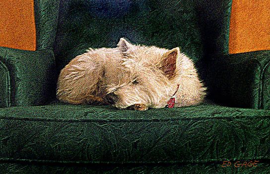 Westie Nap by Ed A Gage