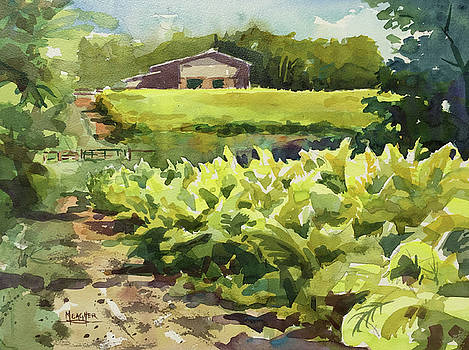 Weston Tobacco Fields by Spencer Meagher