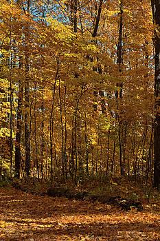 Westridge Lower Park in Autumn 2 by JGracey Stinson
