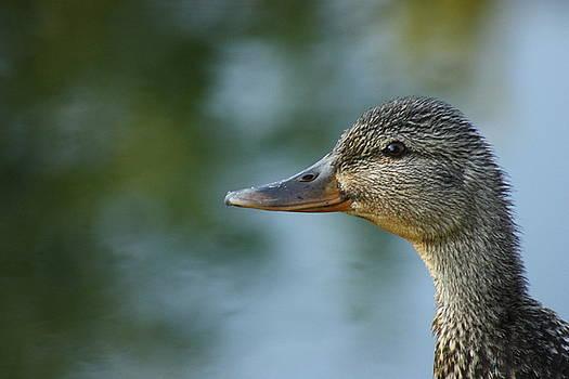Barbara  White - Wet Duck
