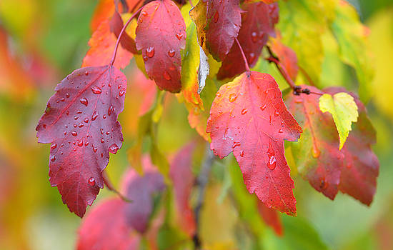 Wet Leaves by Russ Mullen