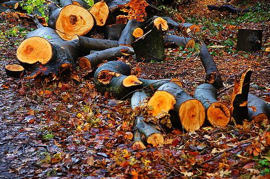 Wet Logs by Nik Watt