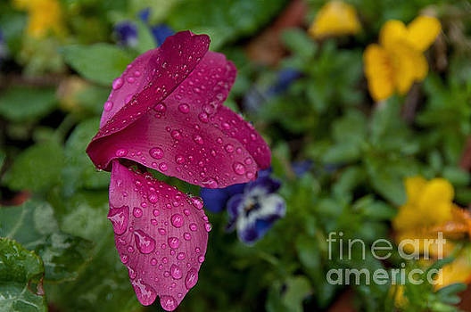 Wet Pink Flower by Leonardo Fanini