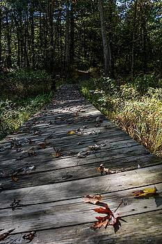 Wetland Boardwalk by Cowboy Visions