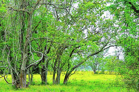 Spade Photo - Wetland Foliage