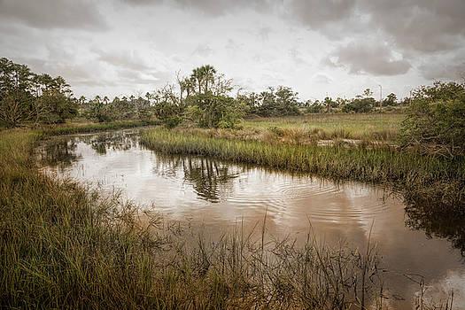 Wetland Habitat by John M Bailey